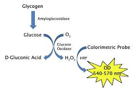 Glicogen Assay Kit 100 Assays